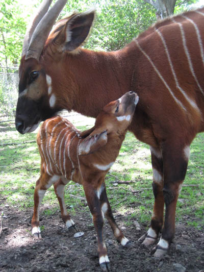Photo Courtesy of Zoo New England