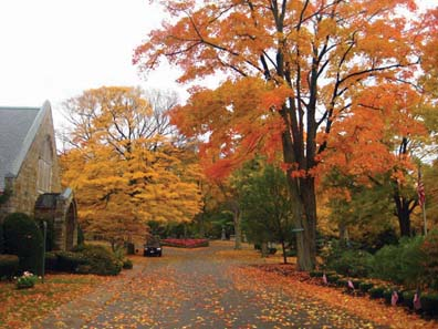 Foliage at Cedar Grove Cemetery