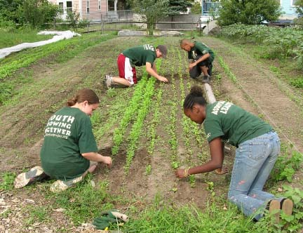 The Food Project: Teenagers from The Food Project working in the Dudley Triangle weed salad mix in 2006. Over 60 youth from Boston and its suburbs will grow food through the Food Project this summer.