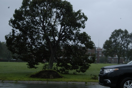 Irene uproots trees along Dorchester Bay