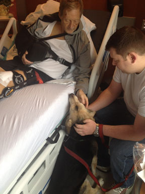 Canine caregiver: Lucy greets John Miles in his hospital bed.