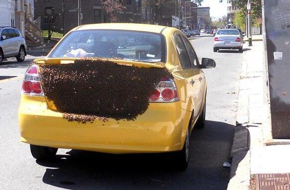 Giant swarm